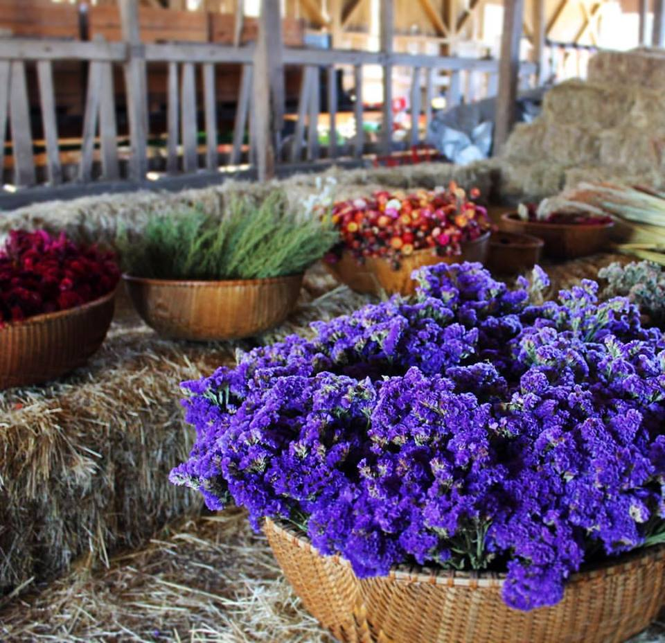 Bushels of dried flowers at Open Field Farm.