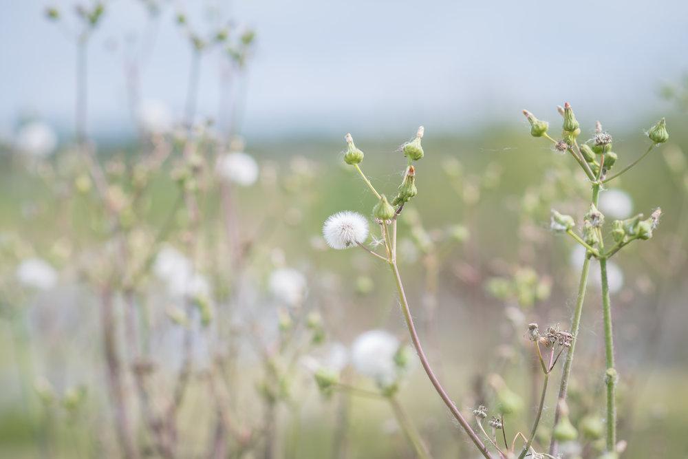 nature-photos-yanitza-ninett-photography-1.jpg