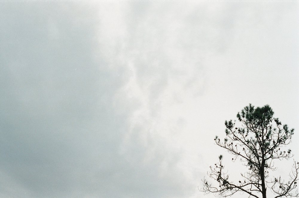 tree branches with film photography Yanitza Ninett photography Orlando Photographer