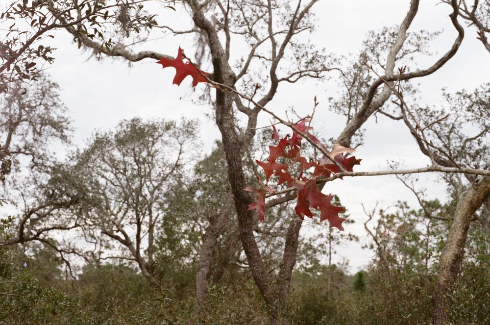 fall leaves in autumn Yanitza Ninett photography Orlando Photographer
