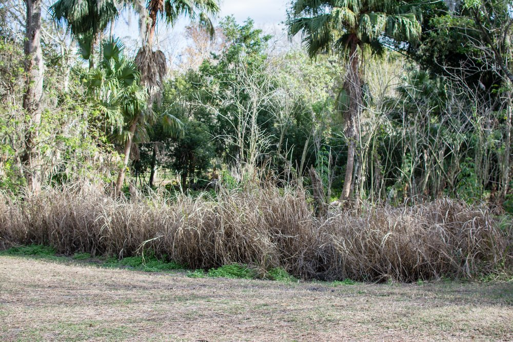 Location: Mead Botanical Garden . Just a few months after Hurricane Irma hit Florida, I had this photoshoot in Mead Botanical Garden. The devastation from the hurricane was still very visible and there were some areas that looked worse than others. However, there is always beauty in nature! The image below was shot at this very same spot, on the same day and time.