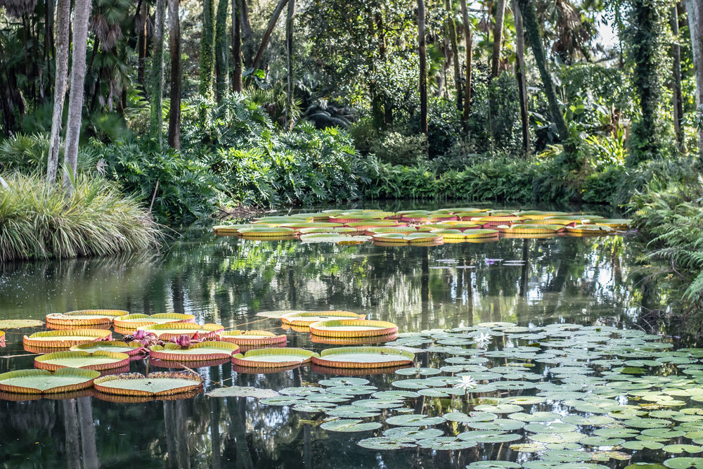 the reflection pool at Bok Tower Gardens in Lake Wales Yanitza Ninett Photography