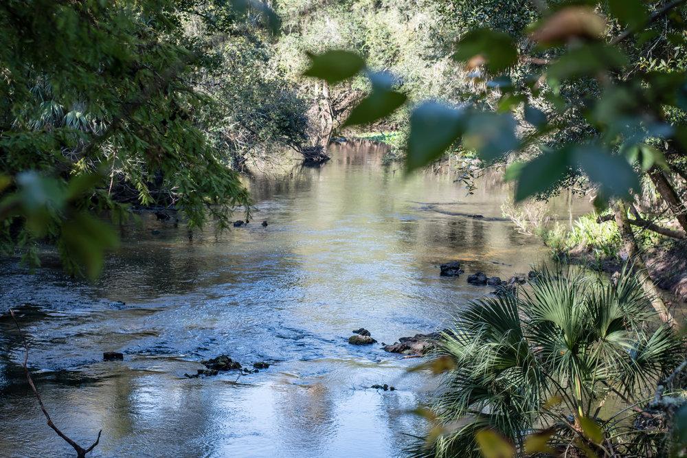hillsborough-river-state-park-orlando-photographer-yanitza-ninett-16.jpg