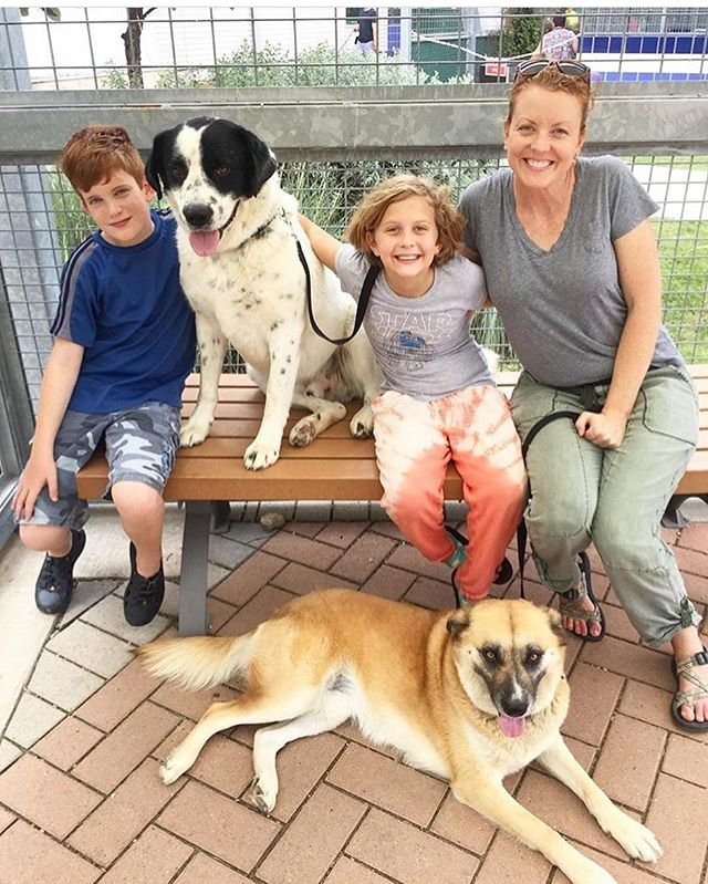 We love when parents take time out of their busy schedules to introduce their children to animal shelters and volunteering. @freegirlfreeworld took her kiddos to @austinanimalcenter to walk Lady and the Tramp here (available for adoption!) ❤️🐾 Let us know if you're planning to walk shelter dogs this summer with your kids! We'd love to hear your stories!