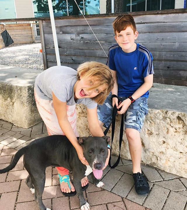 Guys! @1dog1hour will be on @kxan_news today at 11am!! ❤️🐾🐕 Be sure to watch as we share our mission to empower folks to walk shelter dogs with all of Austin!! 📺 {thank you @freegirlfreeworld for the sweet pic of your kiddos doing #1dog1hour!}