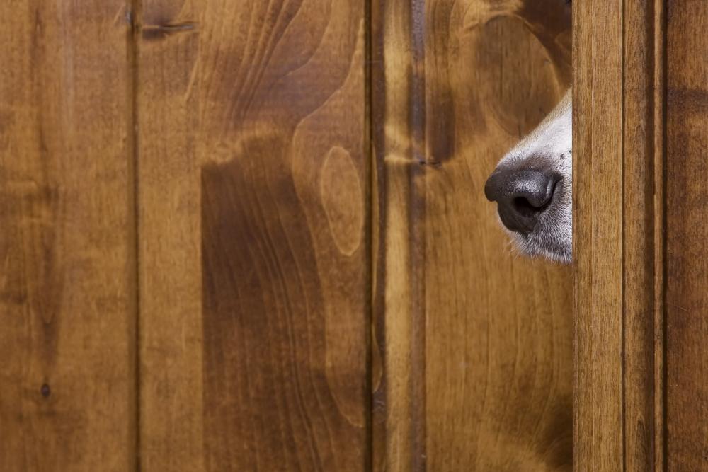 Eavesdropping.jpg