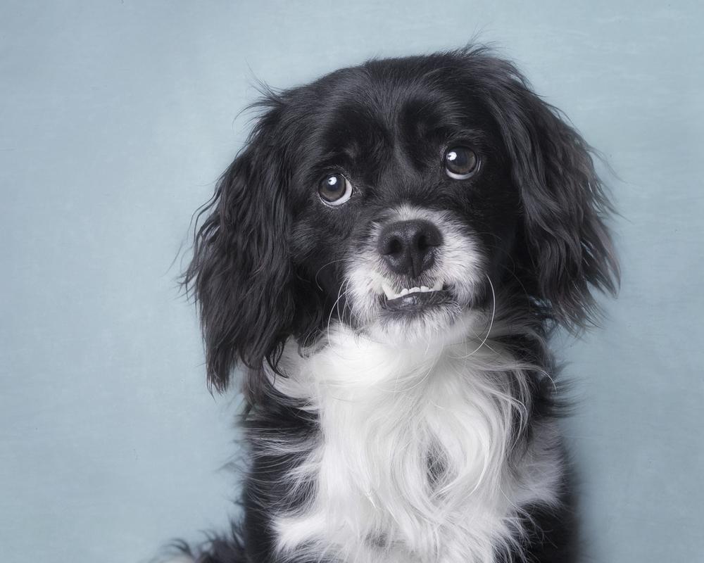 Rescue Dog .jpg