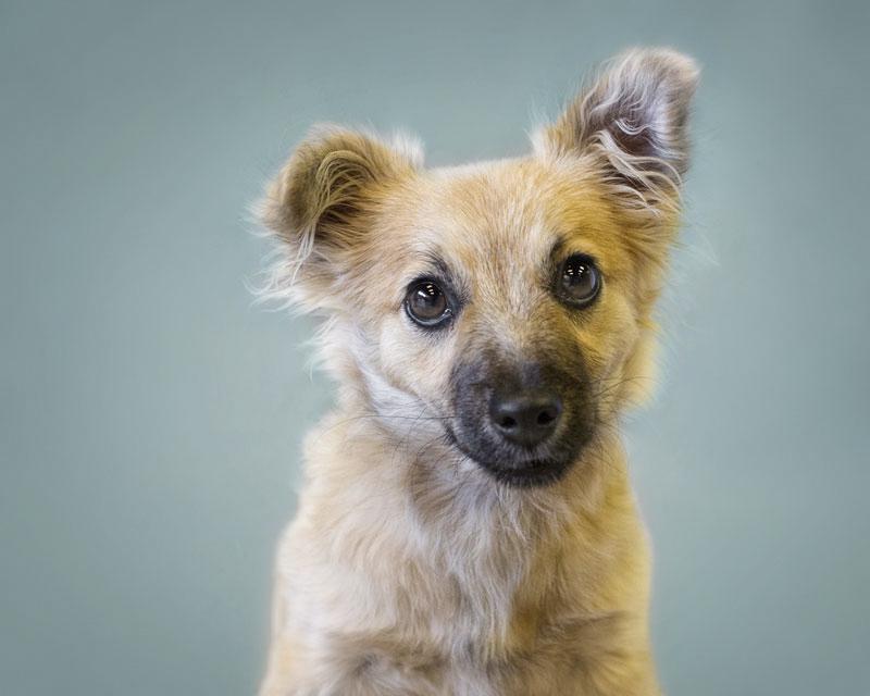 AZHT-puppy2.jpg