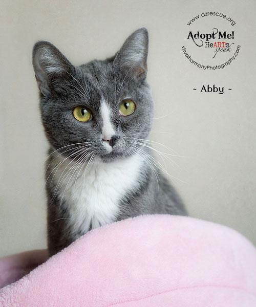 adopt-Abby