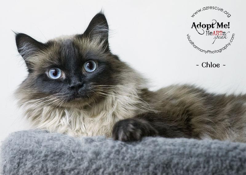adopt-chloe