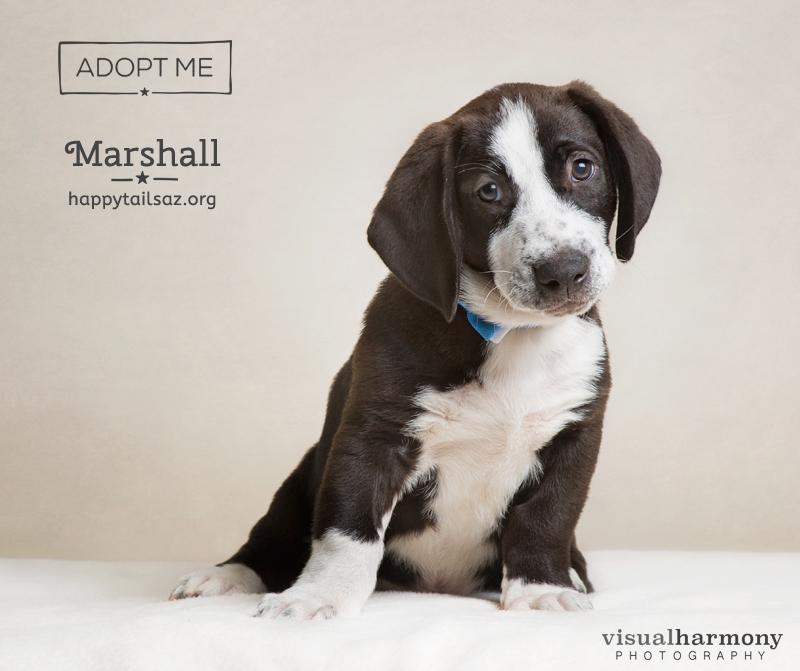 adoptmarshall.jpg