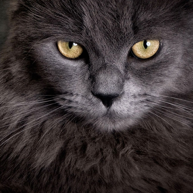 Chroma Cat