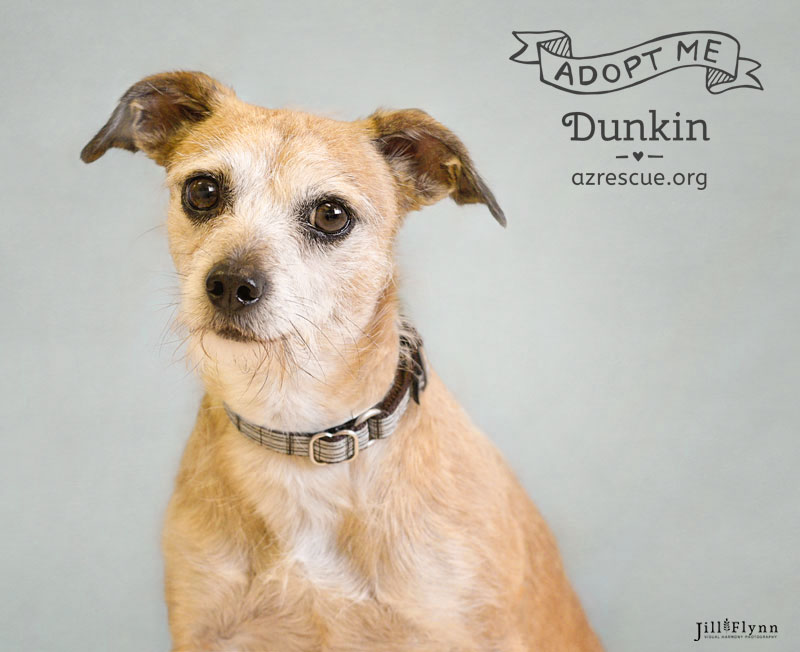 If you love charming, scruffy dogs who love to cuddle, your search is over!  You must meet Dunking at RESCUE.