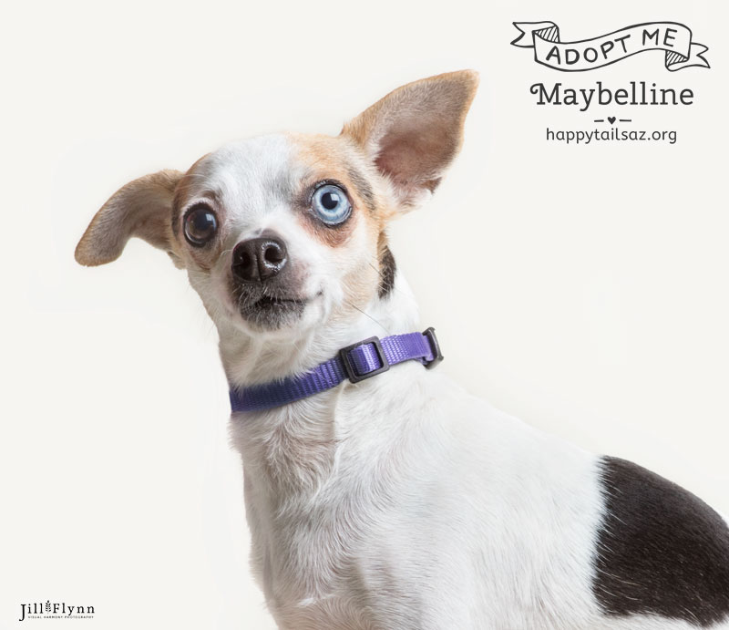 Maybelline is 7 pounds of pure joy. She's easy-going and steals the hearts of everyone she meets. You can meet her at AZ Happy Tails.