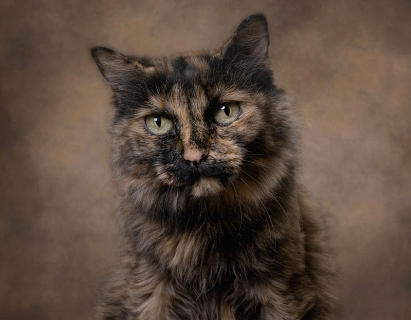 TORTOISESHELL   cats are known for their stunning markings and multi-colored fur. They are usually female and said said to be independent and feisty, which are great characteristics in my opinion.