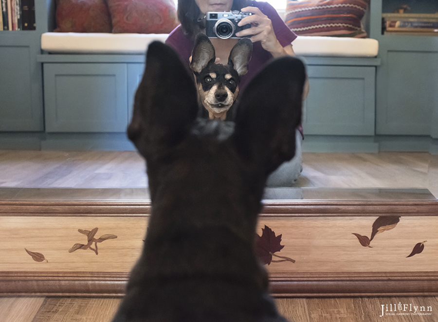 Having fun with Rascal's ears and a mirror. There is a definite advantage to shooting with a small camera.
