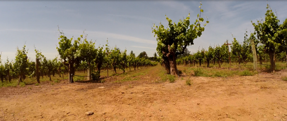Grist Vineyard, Dry Creek Valley