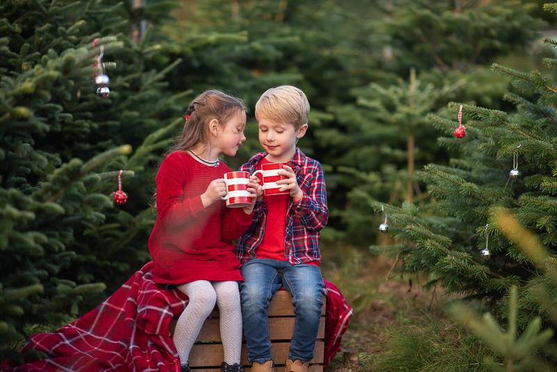 XMAS MINIS - christmas tree farm shoots9 / 10 / 16 / 18 November