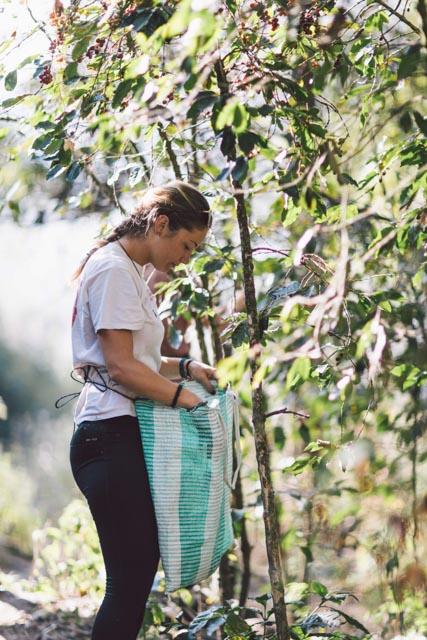 Atitlan Organics Gardening