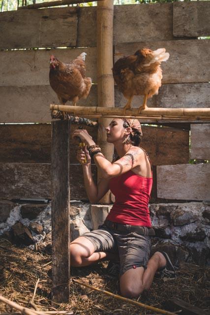 Atitlan Organics Chickens