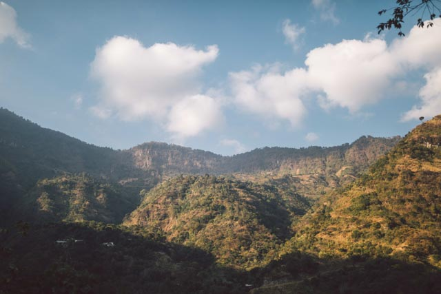 Mountain woodlan, Atitlan Organics