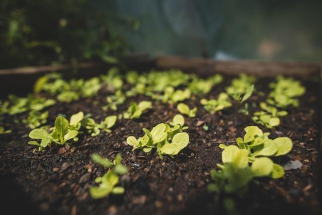Gardens, Atitlan Organics
