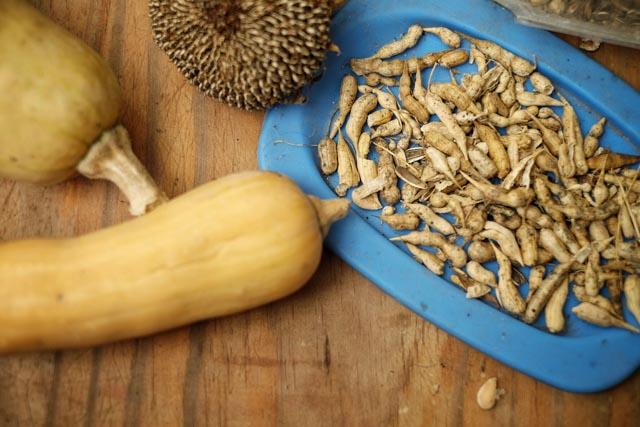 Seed Saving, Atitlan Organics