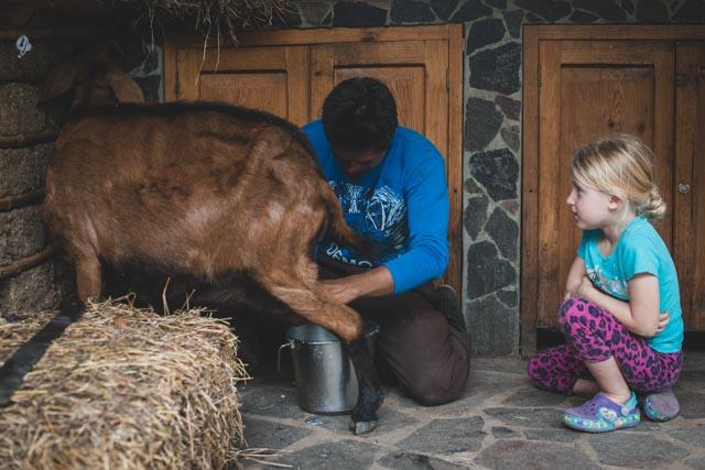 Dairy Goats at Atitlan Organics