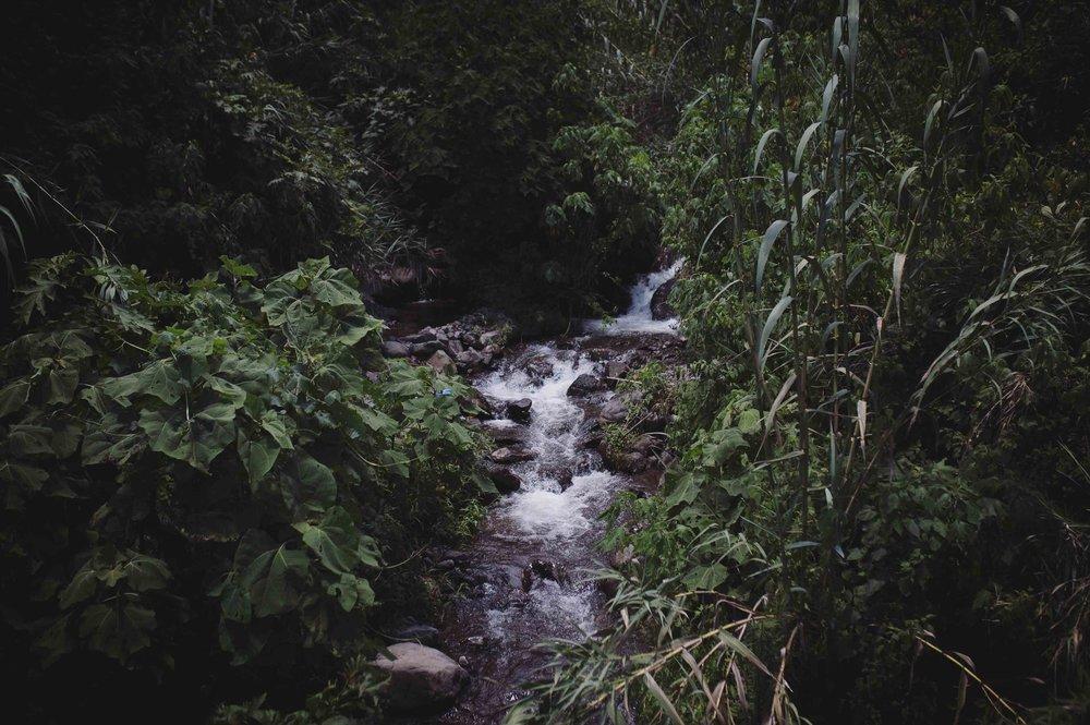 River, Atitlan Organics