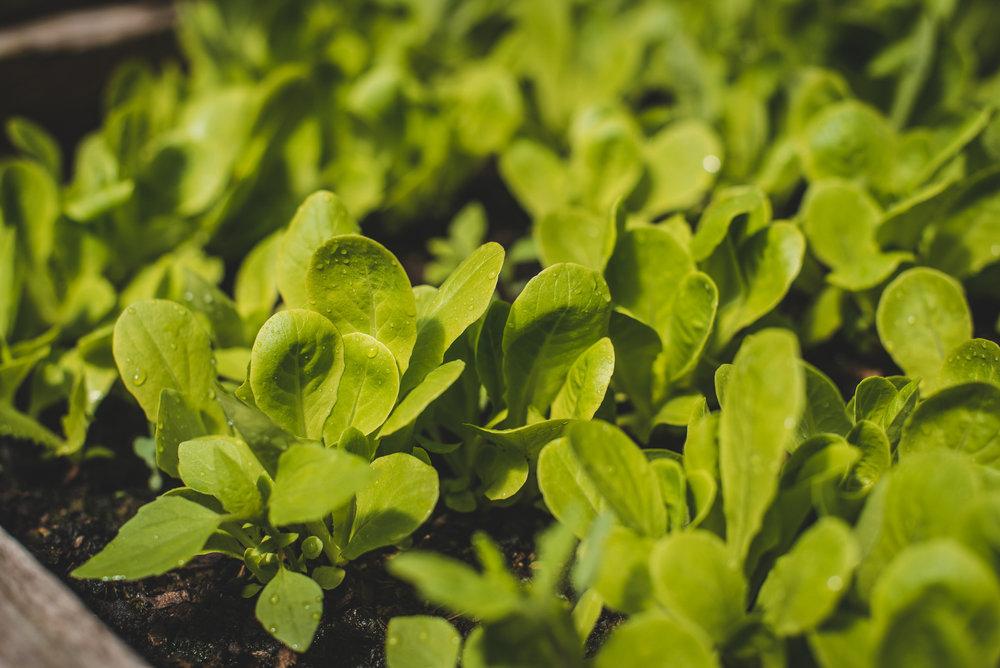 Market Gardens, Advanced Permaculture Course. Atitlan Organics, Caoba Farm, Finca El Por Venir, Abundant Edge Farm, Guatemala, Central America