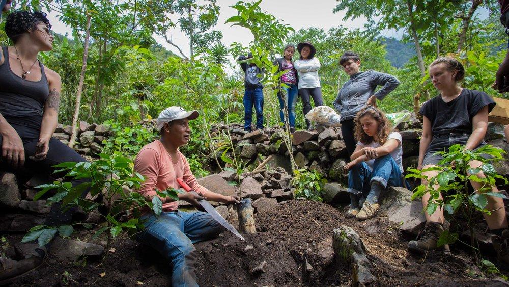 Atitlan Organics Service Initiative, community service, volunteer, international development, food security, food sovereignty, heirloom, avocado, preservation, reforestation, ecosystem restoration, conservation, Atitlan Organics, Tzununa, permaculture, organic, Lake Atitlan, Guatemala