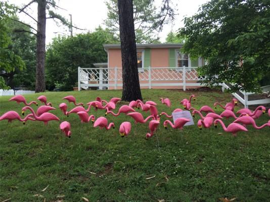 Flocking.jpg