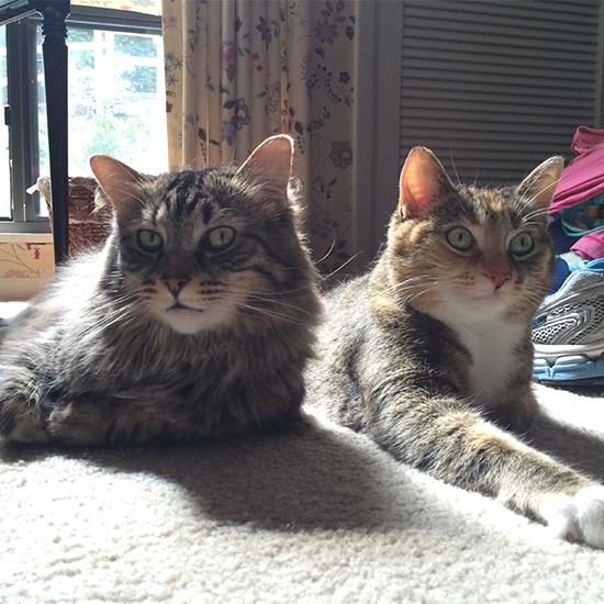 erin-cats