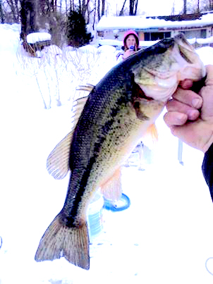 Smallmouth Bass Winter 2014.jpg