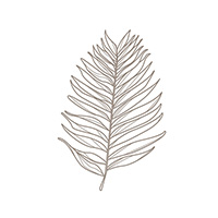 TWINENGINECOFFEE-leaf+artwork34.jpg