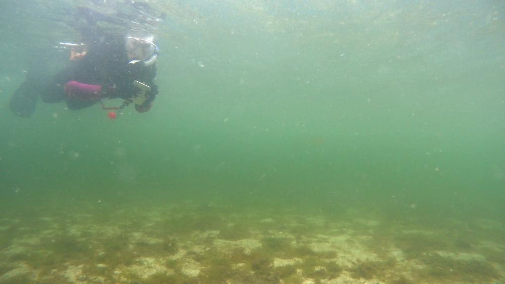 Snorkel.png