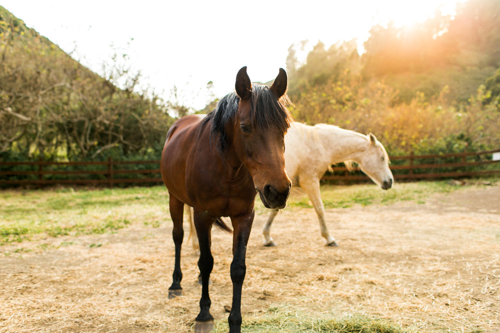 Horses-1.jpg