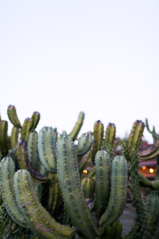 cacti-1.jpg