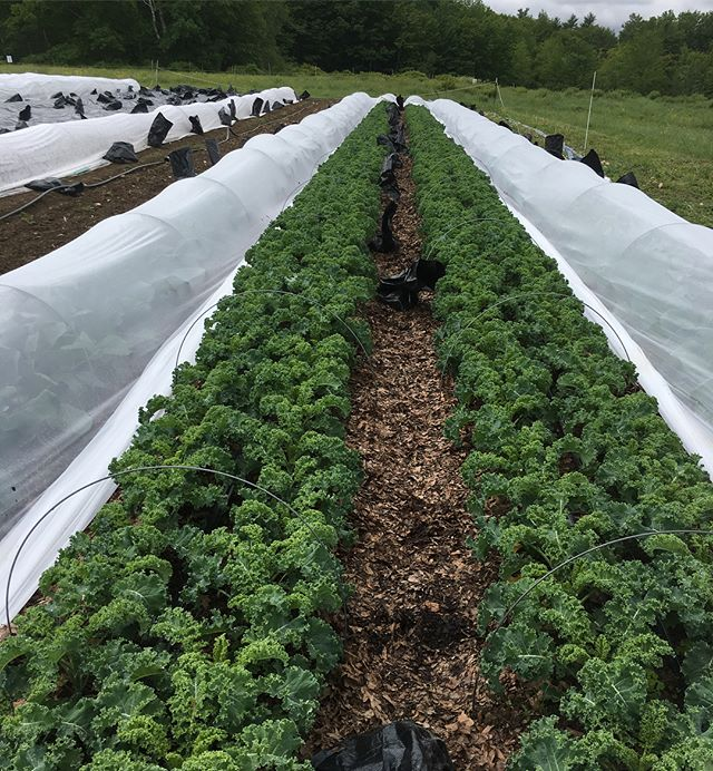 Been a busy few weeks! Crops are looking well after Mother Nature finally helped with watering. We took advantage of the cool overcast to string up all the vines in the tunnels—ahead of schedule for once and right on time for the return of the ☀️ #cukeszukesandtoms #plantingseason #mofgaorganic
