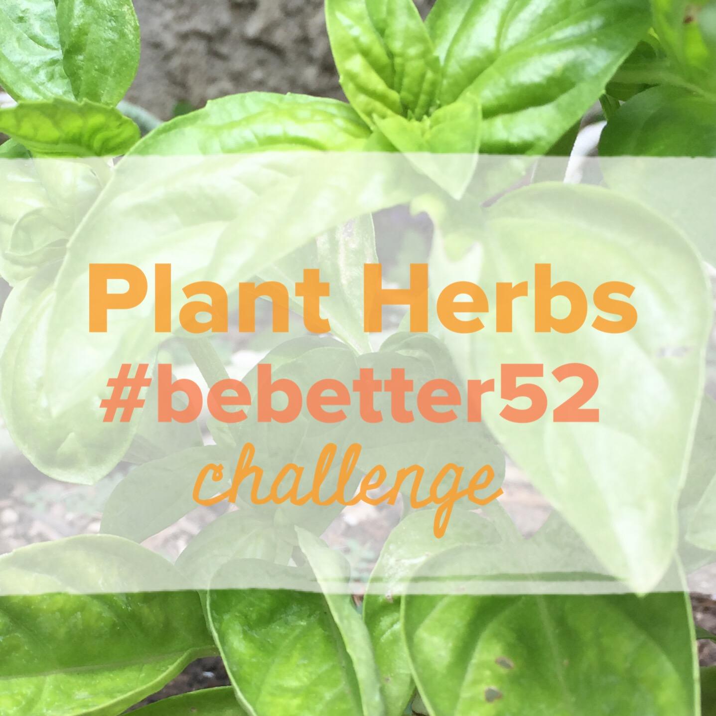 Plant Herbs