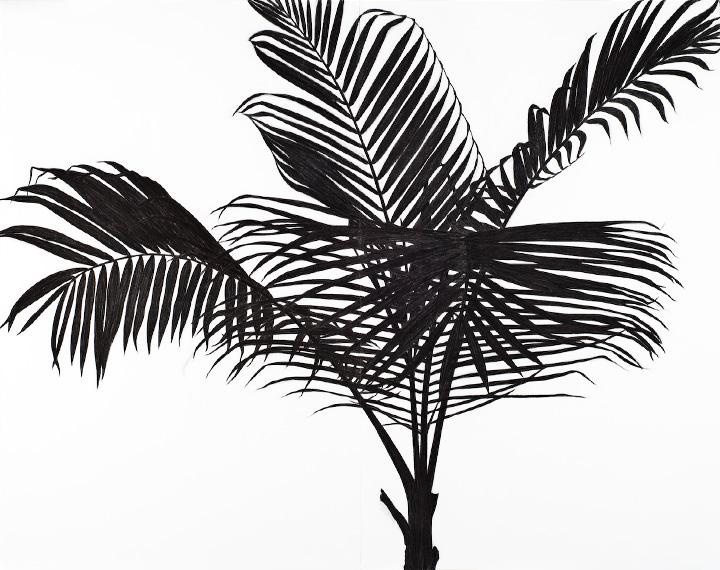 joanwolcott-Palm