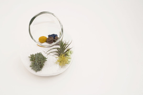 litill-terrariums-1