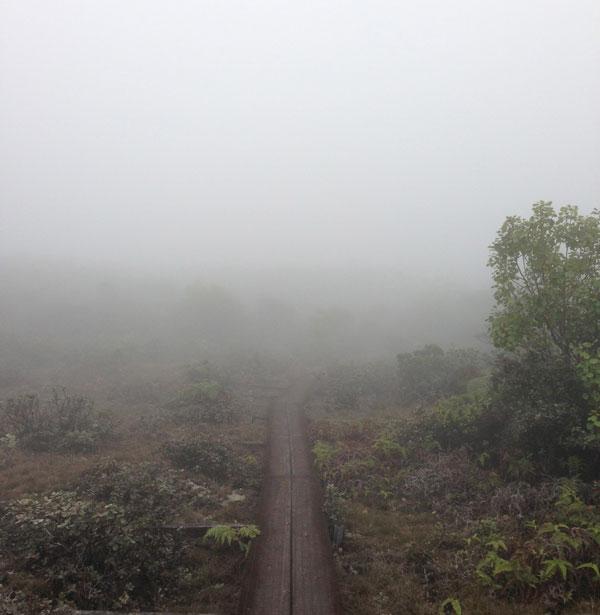 waimea-swamp-mist