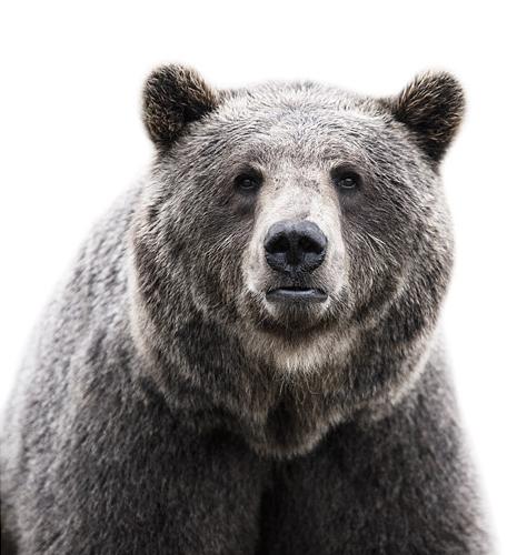 Koldby-Bear01