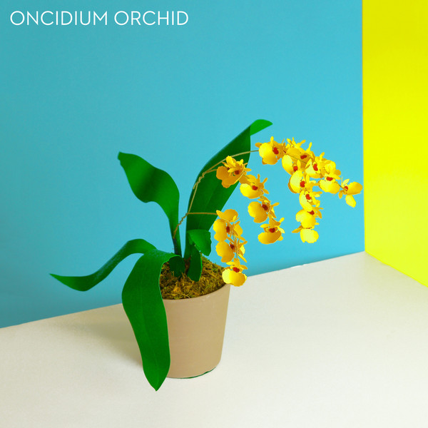 2_Paper_Plants_Product_B_Y_orchid_labled_grande