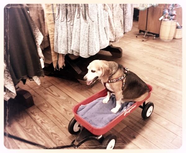 Jaxson enjoyed shopping in Asheville, North Carolina