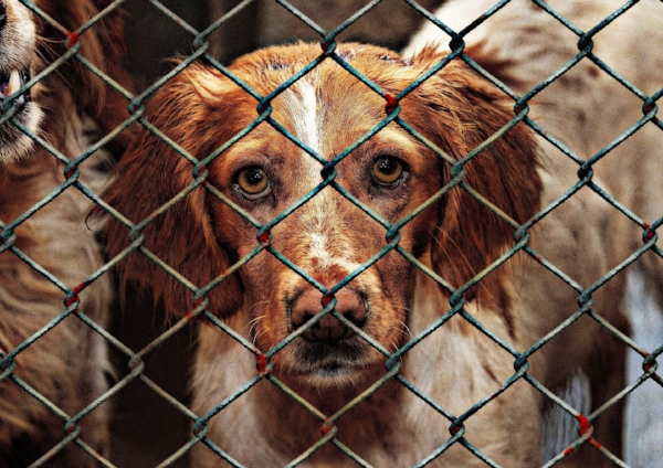 Average number of companion animals euthinized at shelters in the US is 3.5 million, American Humane Society