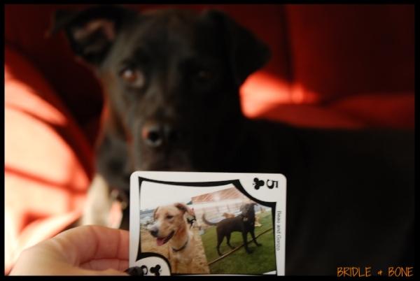 I hear rumors of Gonzo's poker abilities.