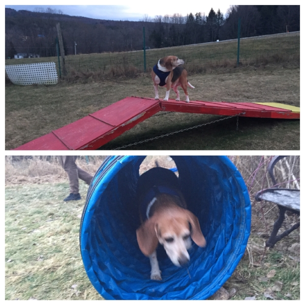 A fenced-in agility course is available for residents of The Paw House Inn.