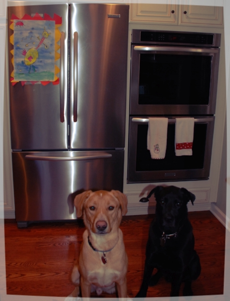 Gonzo and Beau wait impatiently by the ovens while their biscuits bake!